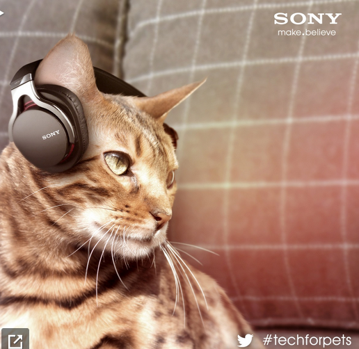 Sony's new cat headphones. https://blog.sony.com/2013/03/animalia/